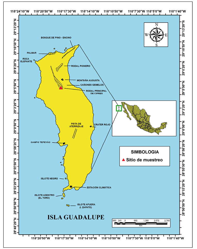 Albatros de patas negras da su primer vuelo en reserva mexicana.